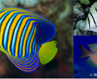 Revealing connections in the sea: Insight into the processes shaping the spatial distribution of marine fishes
