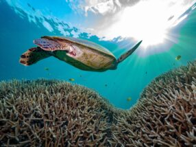 Largest ever reef survey of the Coral Sea Marine Park underway