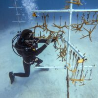 Genotype by genotype by environment interactions in the conservation of reef corals