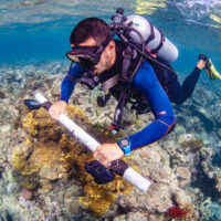Reef researcher wins British Ecological Society prize