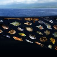 Hidden world just below the surface – biophysical coupling in surface slicks creates pelagic nurseries with ecosystem-scale impacts in Hawaii.