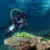 What can the fishes tell us about the world's changing reefs?