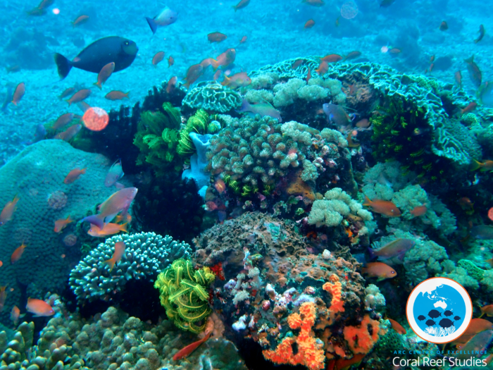 Example of biodiversity on a coral reef. Photo by Paula Cartwright.