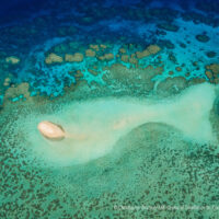 Limited fishing zones support reef conservation