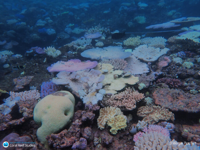 Saving coral reefs requires immediate and drastic reductions in global carbon emissions. Photo of bleached reef at Yamacutta Flat by Morgan Pratchett.