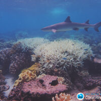 Leading scientists praise UNESCO's leadership after draft decision on the Great Barrier Reef