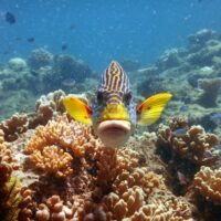 """Space use by reef fishes – more than the science of """"where"""""""